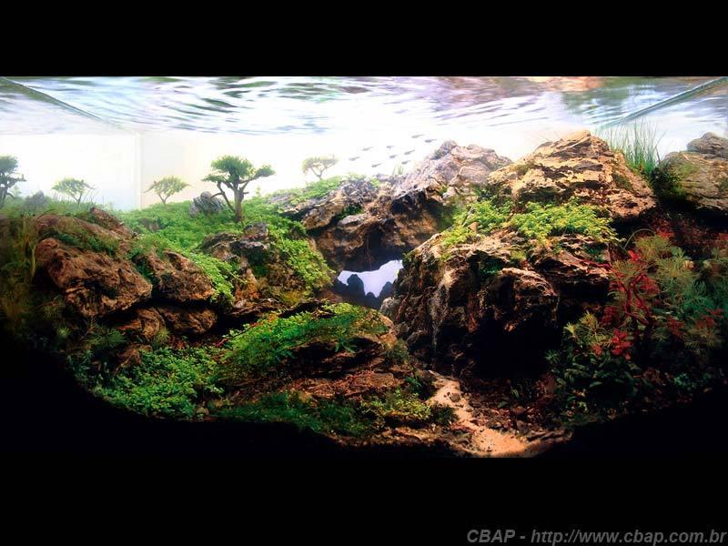 Hồ #112 - 45x30x25 cm (33L)