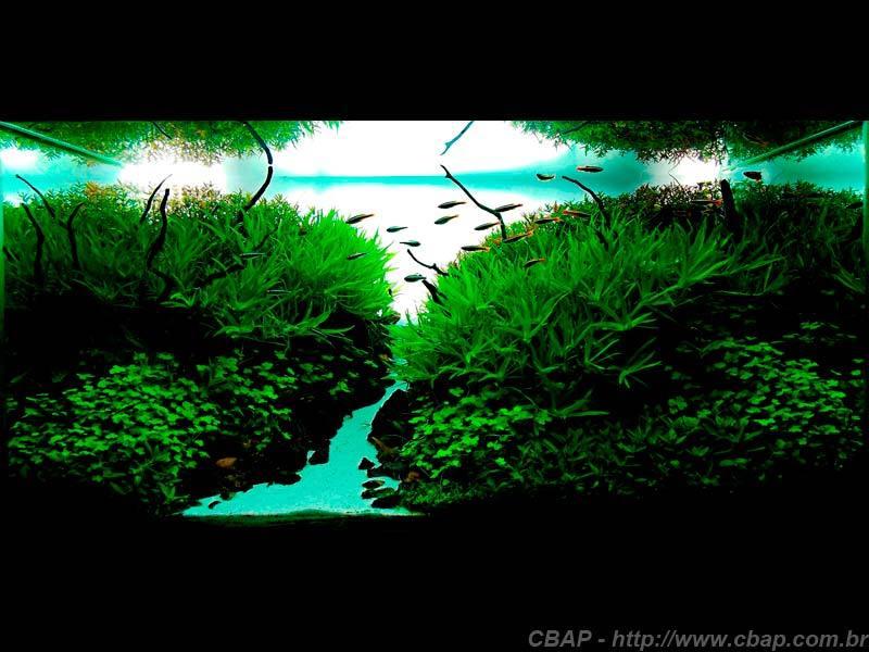 Hồ #026 - 80x45x40 cm (144L)