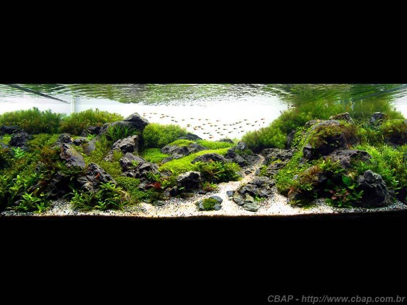 Hồ #035 - 120x60x45 cm (324L)