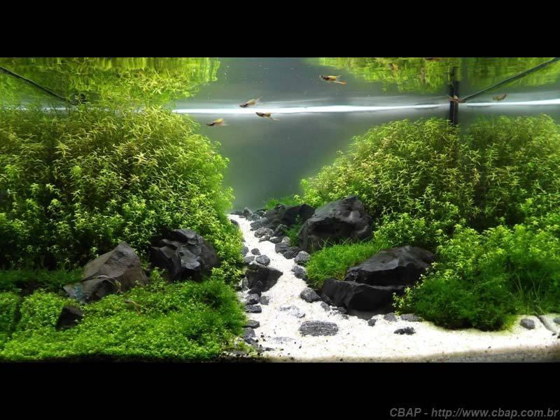 Hồ #065 - 70x50x40 cm (140L)