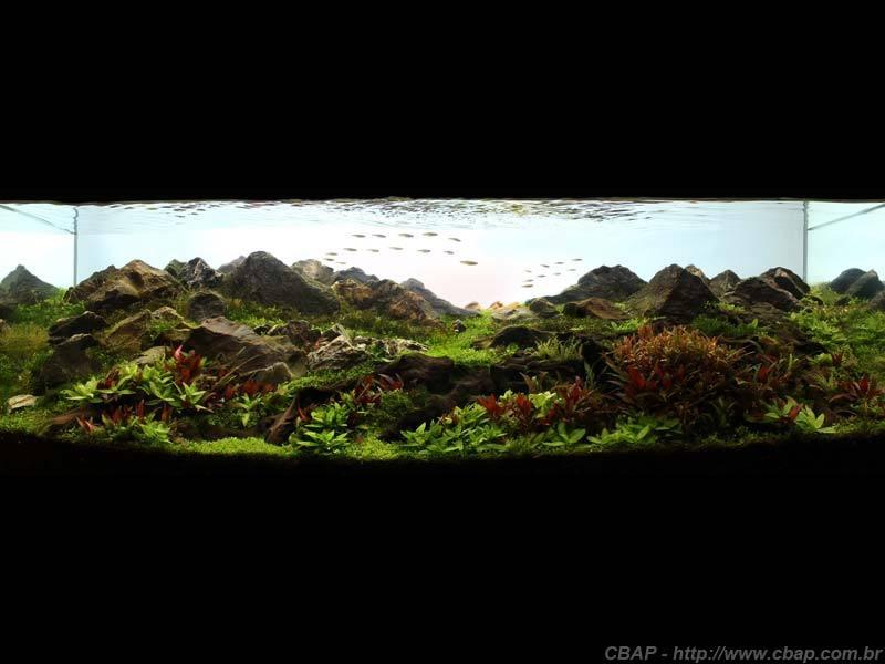Hồ #066 - 100x40x50 cm (200L)
