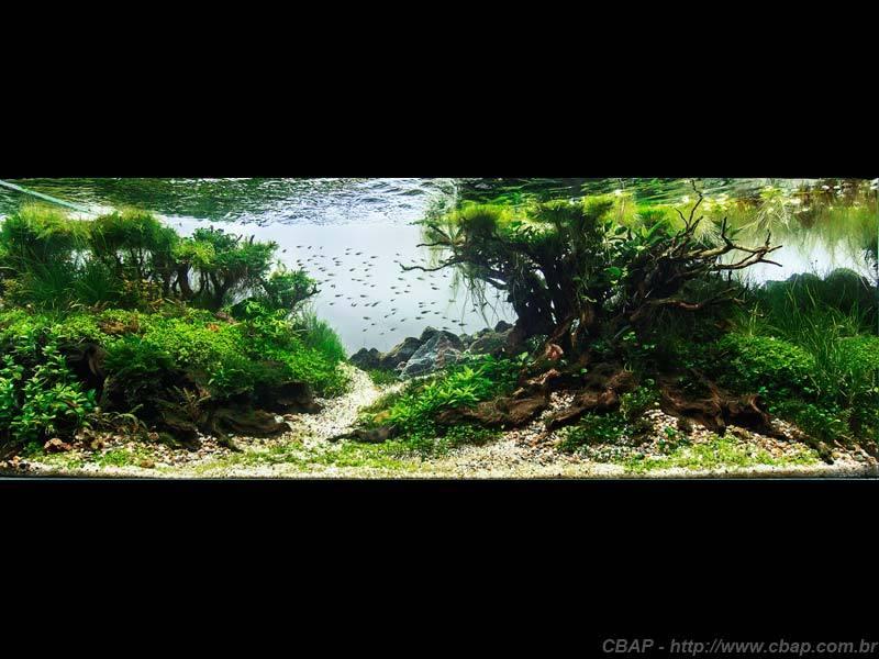 Hồ #070 - 120x45x45 cm (243L)