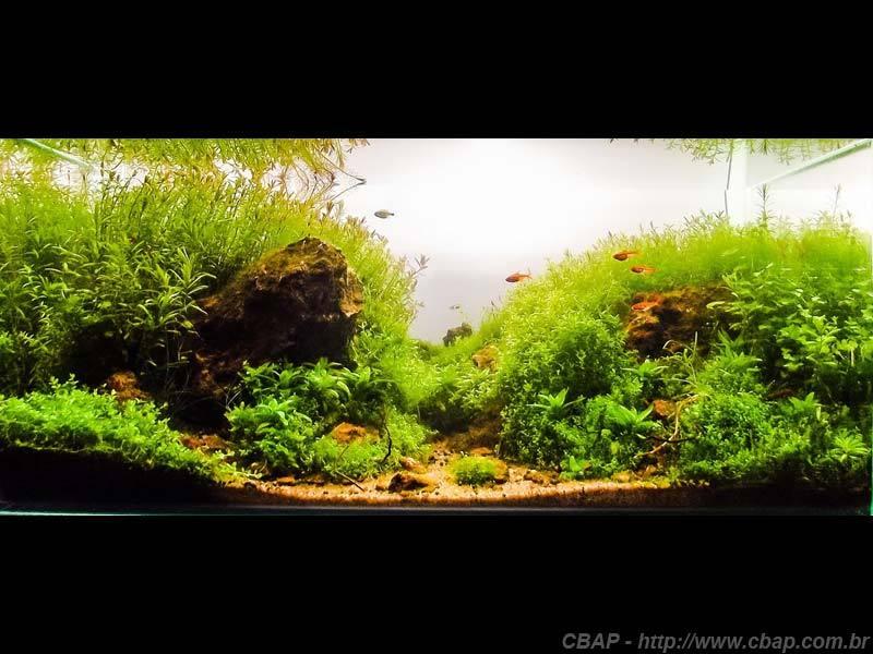 Hồ #104 - 60x35x30 cm (63L)