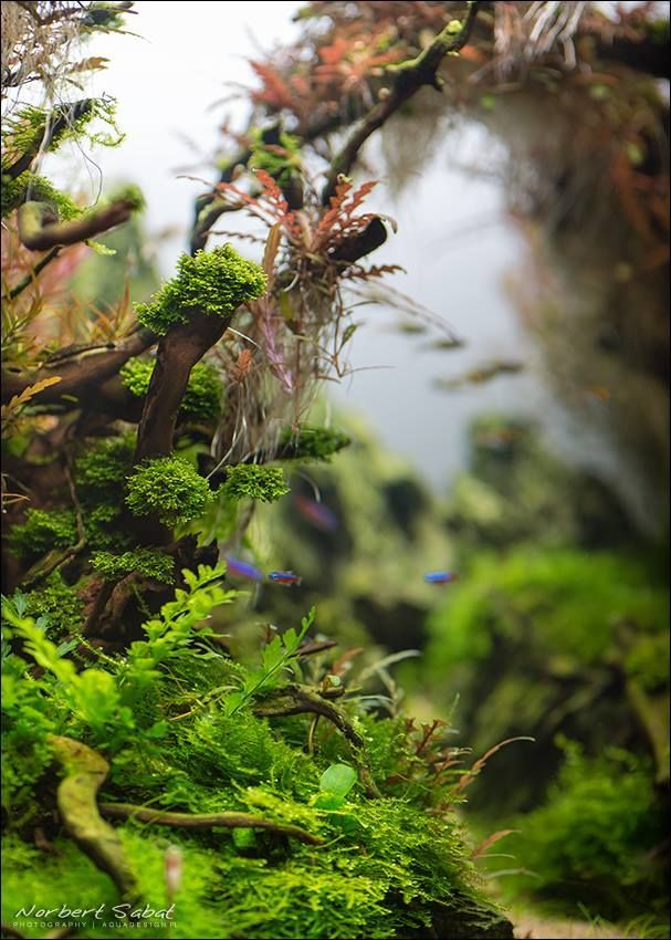 bố cục thủy sinh mô phỏng rừng