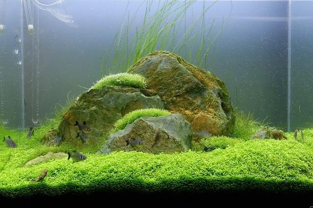 hình ảnh hồ thủy sinh 60cm hoàn thiện