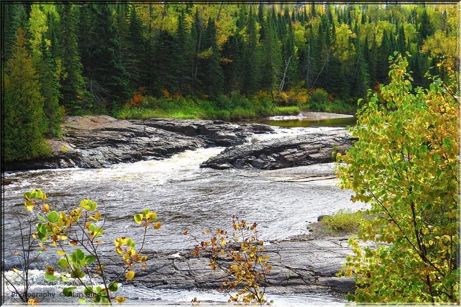 cảm hứng bố cục dòng sông thủy sinh