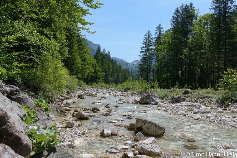 bố cục sông suối cho bể thủy sinh