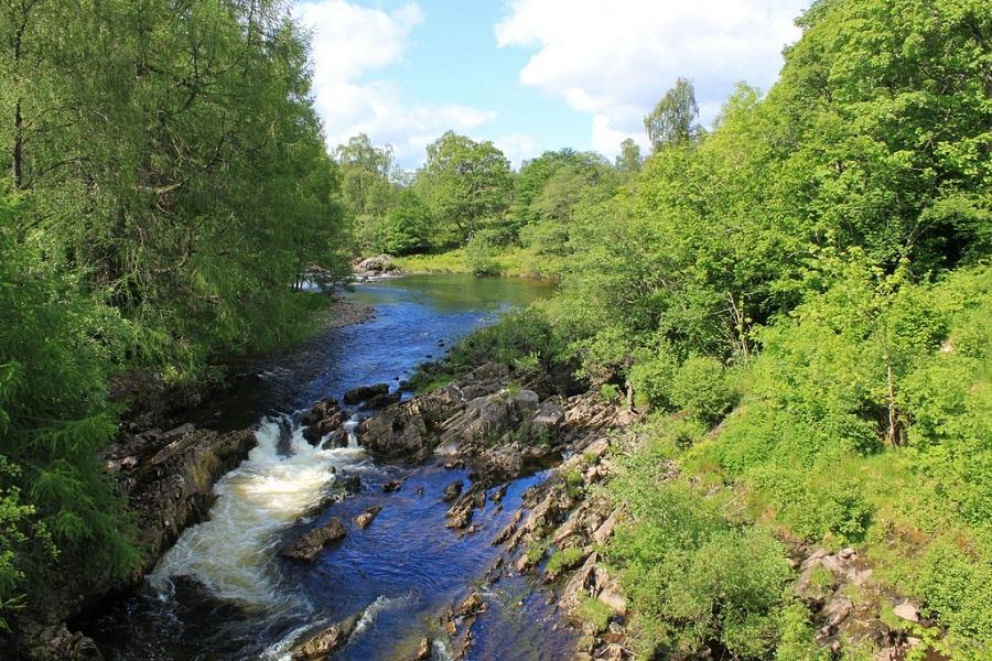 bố cục dòng sông và cánh rừng