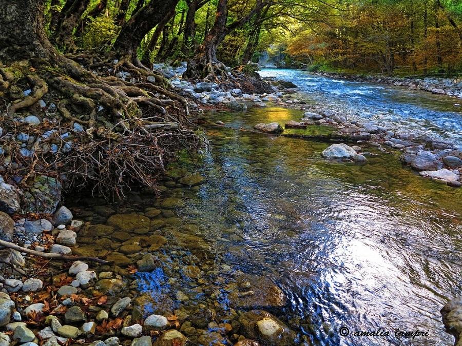 rễ cây và dòng suối