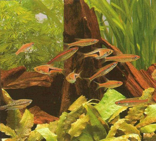 chất thải của cá cũng là thức ăn cho cây thủy sinh
