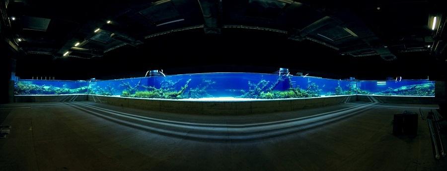 bể thủy sinh dài 40m