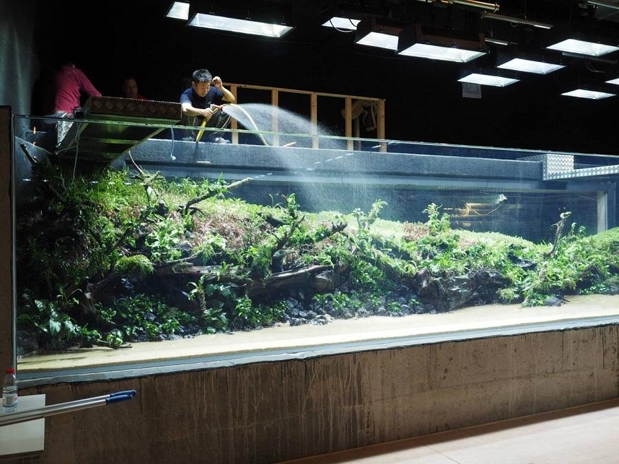 góc trái bể thủy sinh lớn nhất thế giới