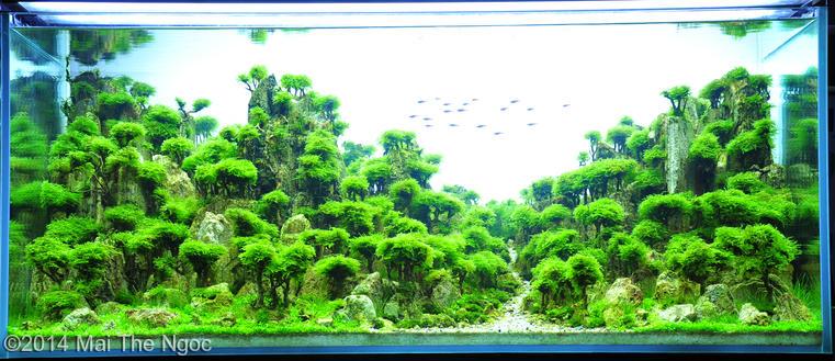 bể thủy sinh The green hopefullness AGA 2014