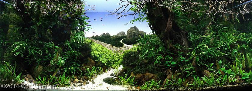 bể thủy sinh Picturesque landscape AGA 2014