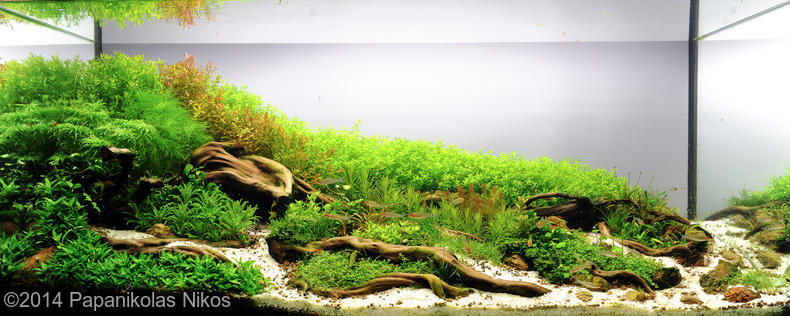 hồ thủy sinh Roots AGA 2014