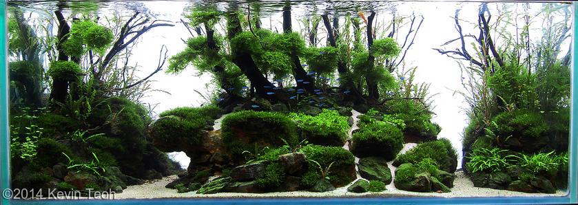 hồ thủy sinh The island AGA 2014