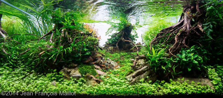hồ thủy sinh The last green mile AGA 2014