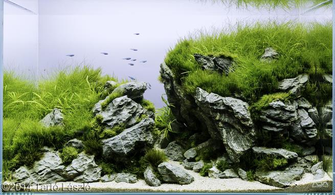 hồ thủy sinh the rupture AGA 2014