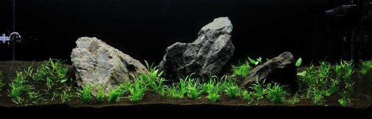 trồng cây vào bể thủy sinh sanzon iwagumi mark evans