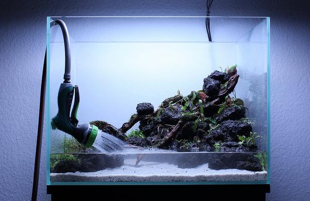 trồng cây hồ thủy sinh 60cm
