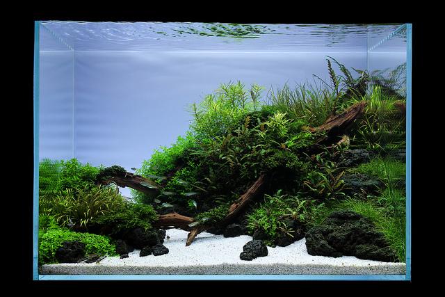 hồ thủy sinh 60cm lũa đá