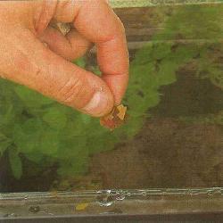 thức ăn cho cá cũng là dinh dưỡng cho cây thủy sinh