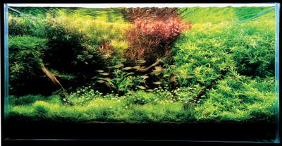 bể thủy sinh tự nhiên nhiều màu sắc