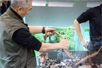 takashi amano ghép lũa thủy sinh