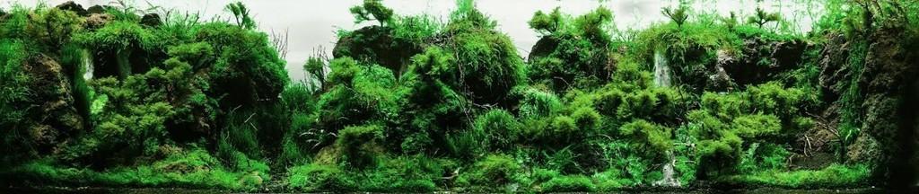 bể thủy sinh green rainforest tham dự HAC 2014