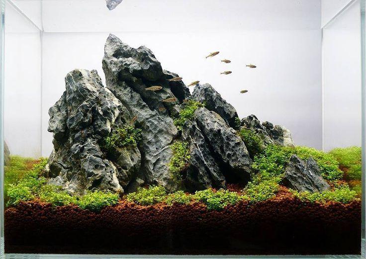 sắp xếp bố cục đá trong bể thủy sinh