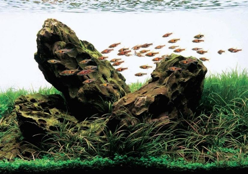 bể thủy sinh bố cục đá ADA