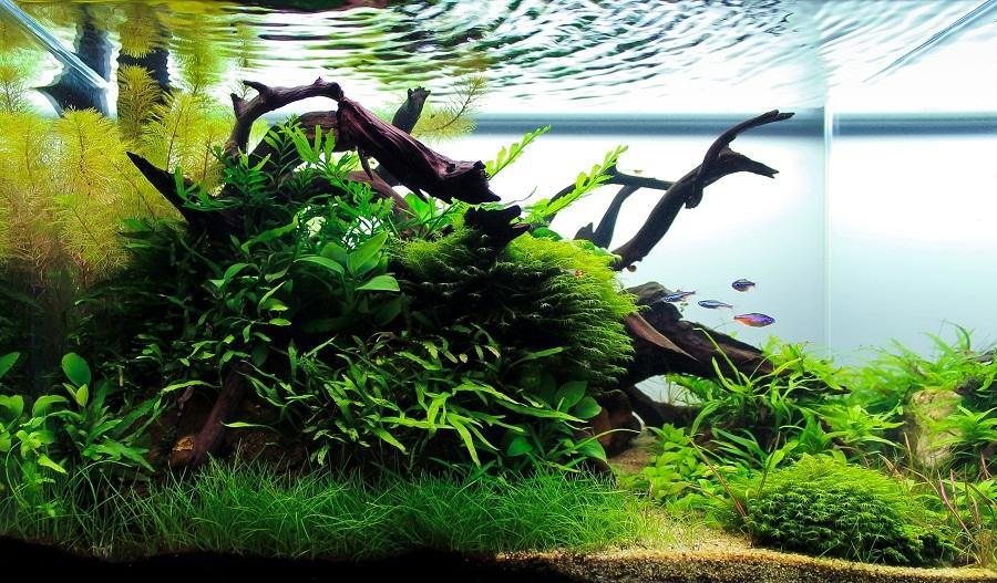 Prolifération végétale (38 L - 45x28x30)