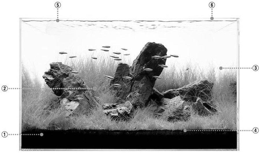 bẩn nước bể thủy sinh