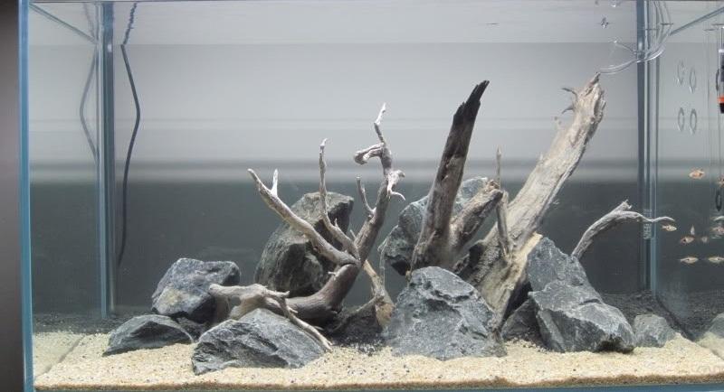 bố cục đá lũa bể thủy sinh