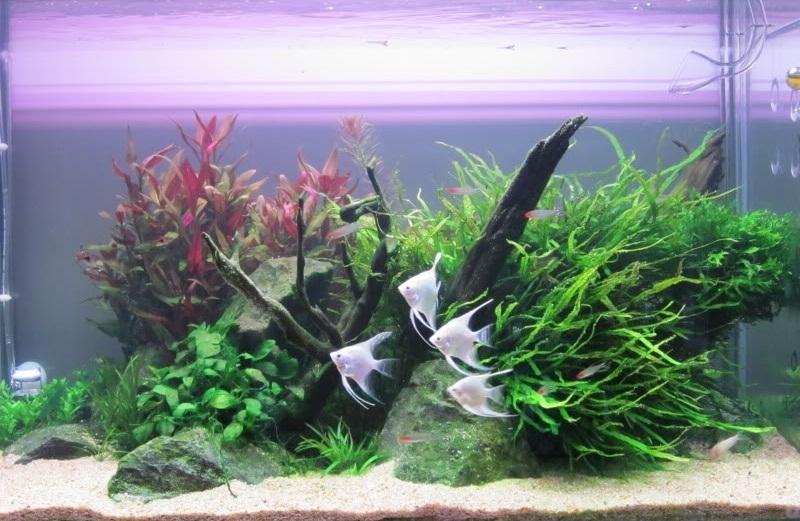 trồng cây vào bể thủy sinh 90