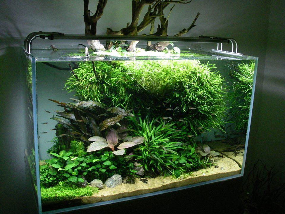 cây thủy sinh phát triển tốt
