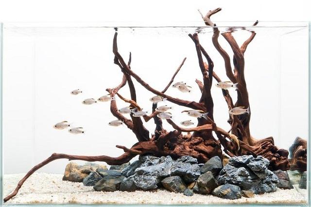 kết hợp đá và lũa bể biotope
