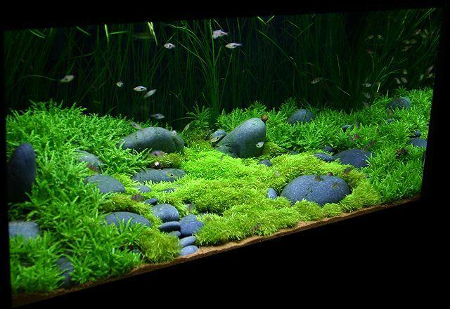đá cuội trong bể thủy sinh
