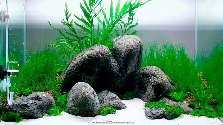 đá cuội lạ mắt trong hồ thủy sinh
