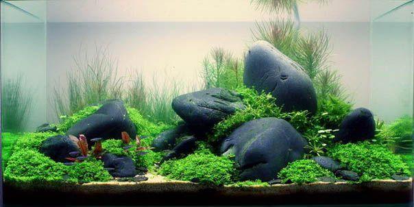 bố cục hồ thủy sinh với đá cuội xanh trơn
