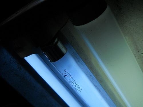 đèn oddysea t5ho cho bể thủy sinh