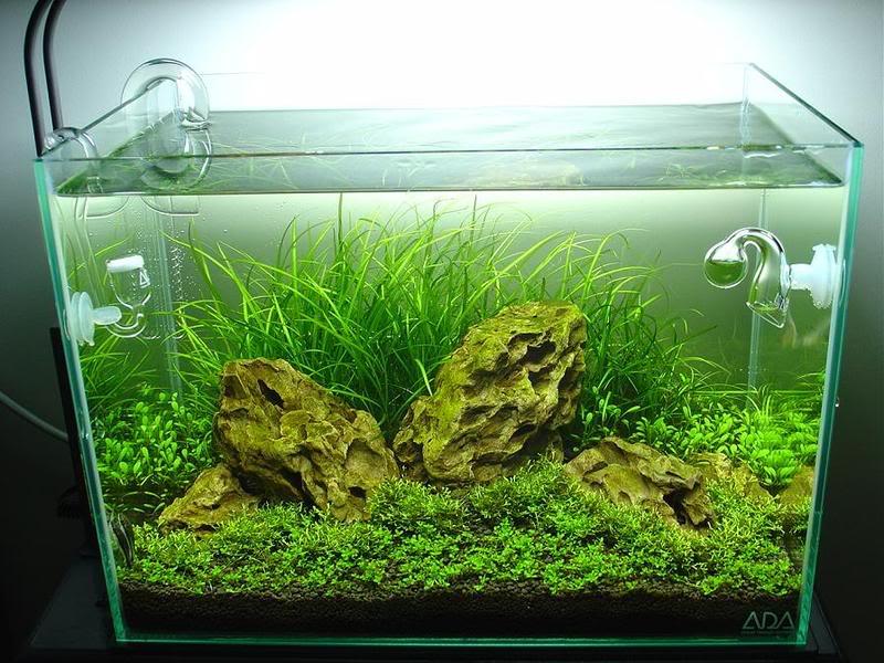 trồng cây bể thủy sinh iwagumi nhỏ