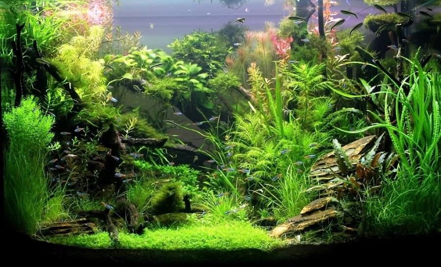 hồ thủy sinh bố cục rừng