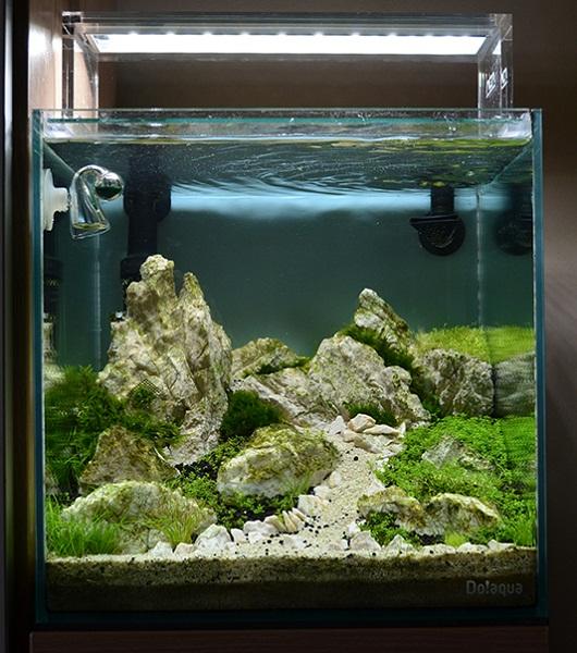 trồng cây hồ cubic 30