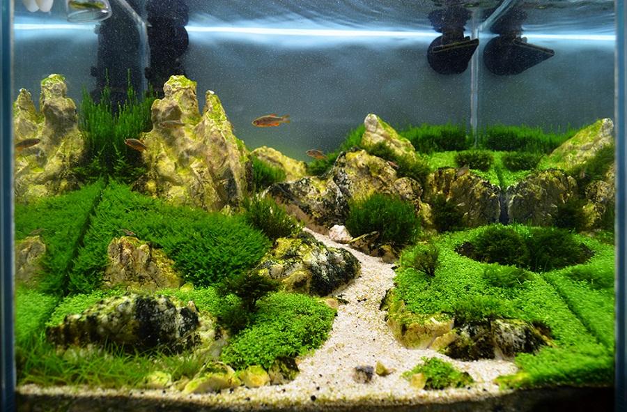 hồ cubic 30 chơi rêu