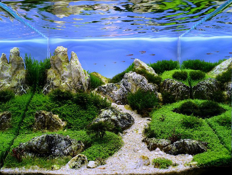 hồ cubic 30 bố cục đá có chiều sâu