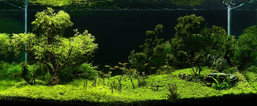 Hạng 131 - Forested Wetland - 90x45x45 cm