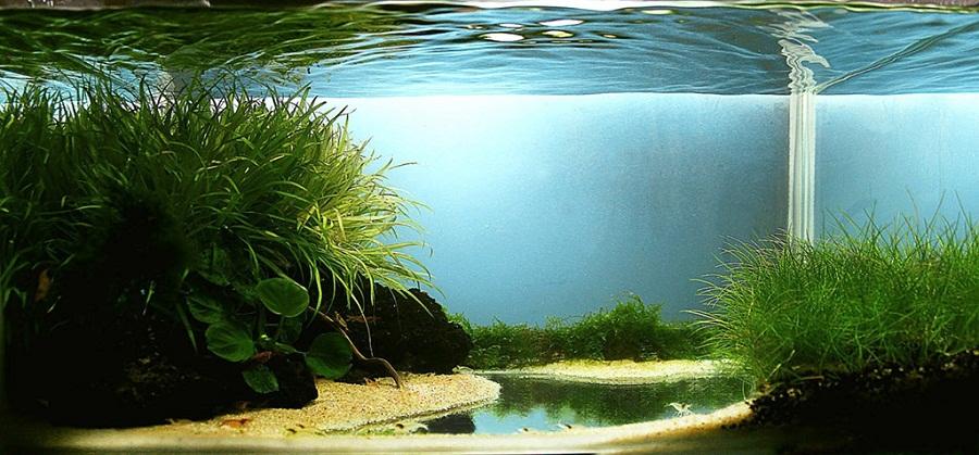 Hạng 160 - Shrimp Garden - 40x30x30 cm