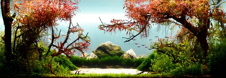 Hạng 87 - A quiet morning on the lake - 120x45x45 cm
