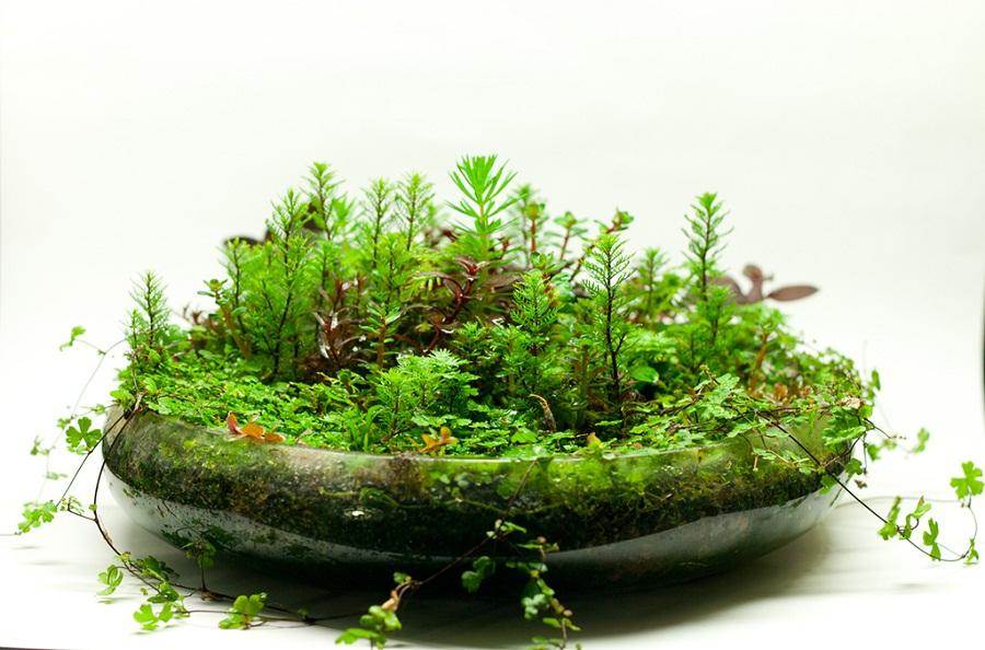 Hạng 02 - Work bowl - 30x050x30 cm